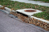 Leaves In Drain (Freshwater Foundation)