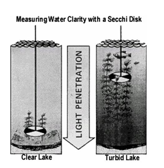 Secchi Disc Water Clarity Measurement (image)